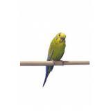 Penn Plax Жердочка для птиц дерево 28*1 см 2 шт